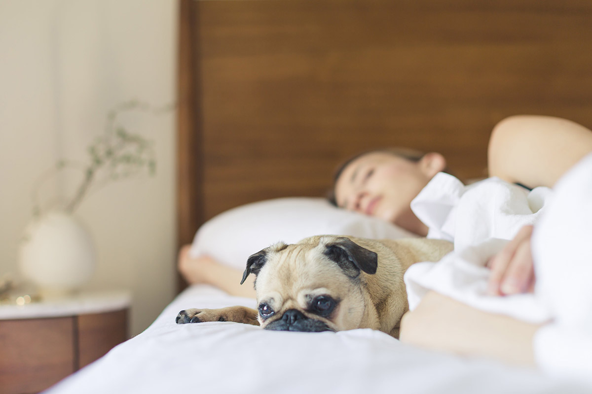 Fatigue & Fog - Matriarch Health & Wellness